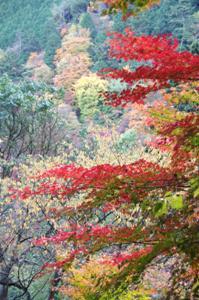2008・京都・秋 (29)