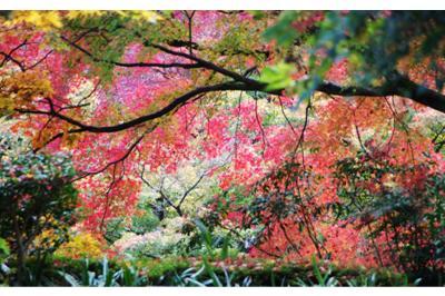 2008・京都・秋 (30)