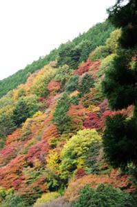 2008・京都・秋 (33)