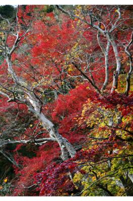 2008・京都・秋 (39)