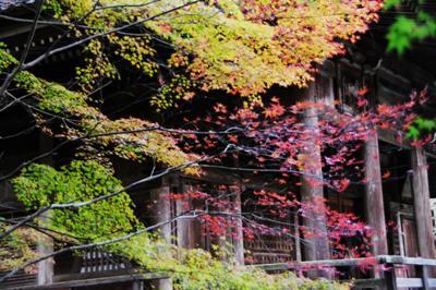 2008・京都・秋 (41)