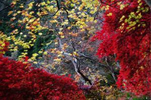 2008・京都・秋 (43)