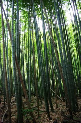 2008・京都・秋 (45)