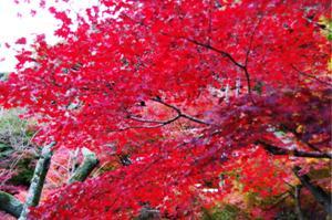 2008・京都・秋 (47)