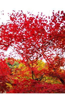 2008・京都・秋 (49)