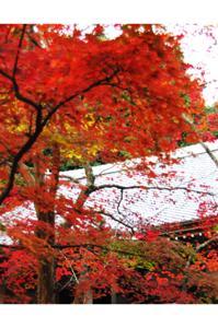 2008・京都・秋 (51)