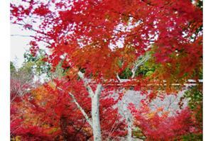 2008・京都・秋 (54)