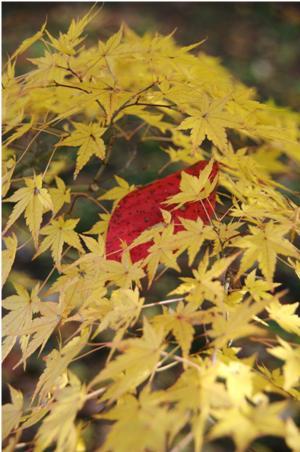 2008 秋 (18)