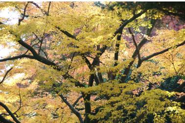 2008 秋 (20)