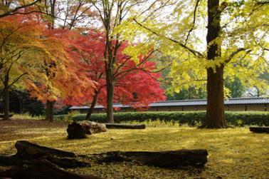 2008 秋 (33)