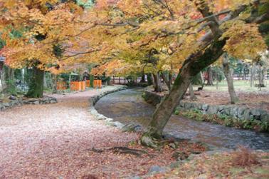2008 秋 (46)