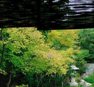 秋の七草105