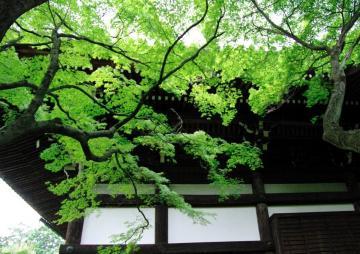 aki116_convert_20091029130907.jpg