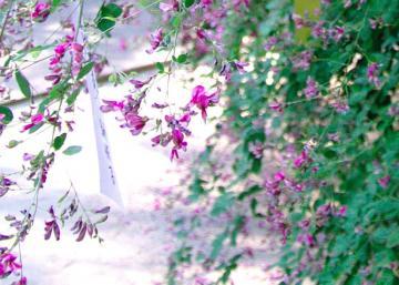 秋の七草13