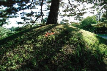 秋の七草15