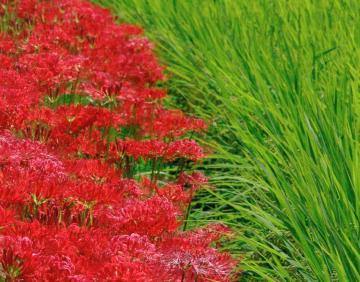 秋の七草35