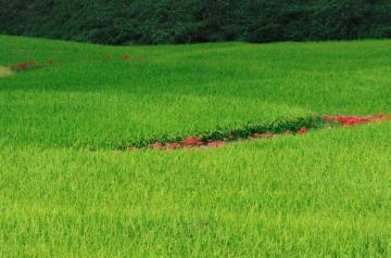 秋の七草36