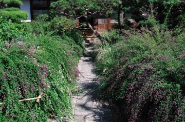 秋の七草11