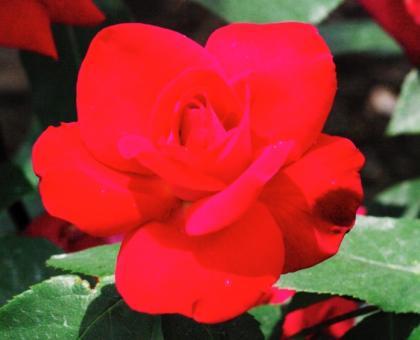 bara39_convert_20090625135302.jpg