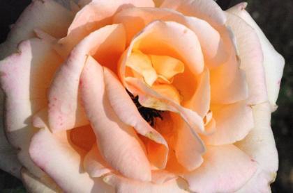bara42_convert_20090625135410.jpg