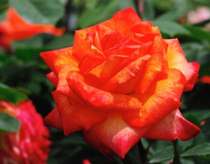 bara48_convert_20090625135540.jpg