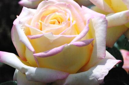 bara58_convert_20090625135805.jpg