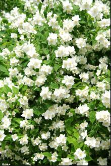 flower10_convert_20081110144409.png