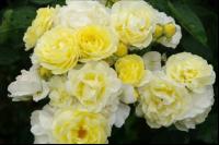 flower6_convert_20081110144226.png