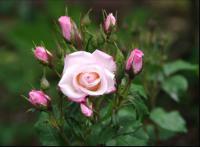 flower8_convert_20081110144314.png