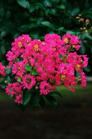 夏の花14