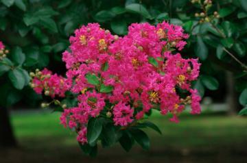 夏の花15