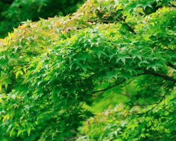 夏の花16