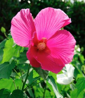 夏の花28