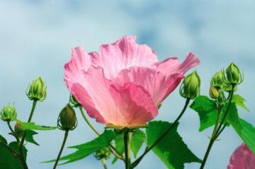夏の花31