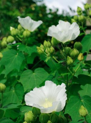 夏の花36