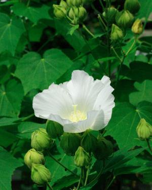 夏の花38