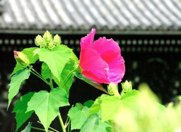 夏の花39
