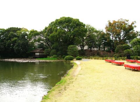京都桜便り20