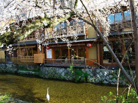 京都桜便り24