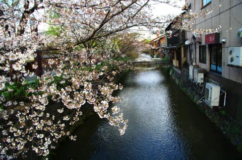 京都桜便り25