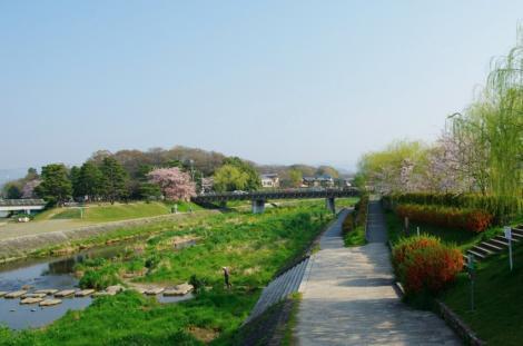 京都桜便り2