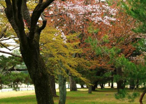 sakura37_convert_20090504134401.jpg