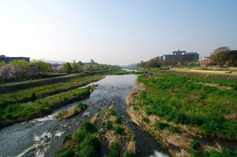 京都桜便り3