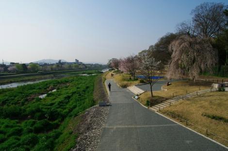 京都桜便り4