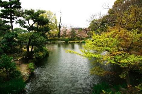 京都桜便り8