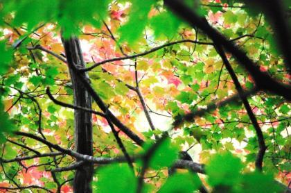 東京の秋14
