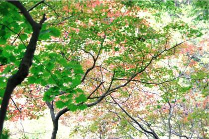東京の秋15