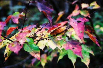 東京の秋16