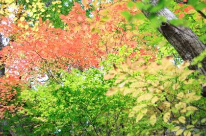東京の秋18
