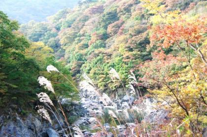 東京の秋21